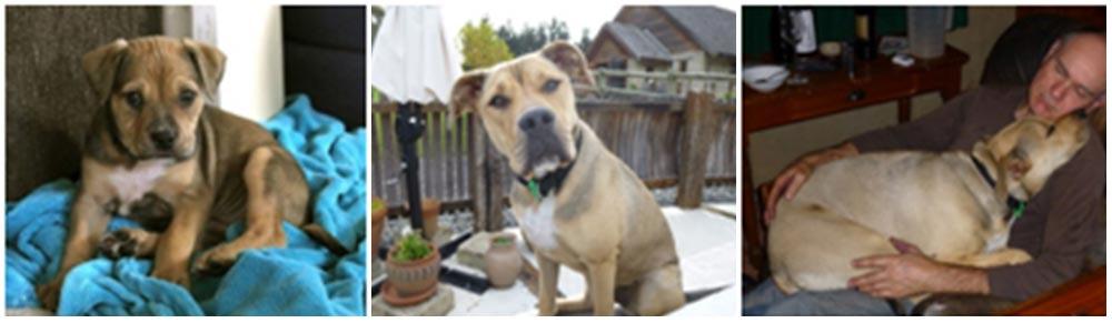 gracie-winery-dog